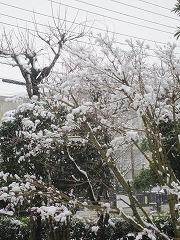 雪なのに 武蔵野線が 動いてる(五七五)