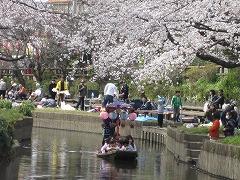 元荒川沿いに咲く500本の桜並木