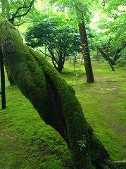 ちょろっと生えてる枝も、きっと意図的