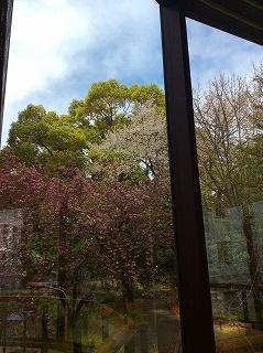 桜はまだある